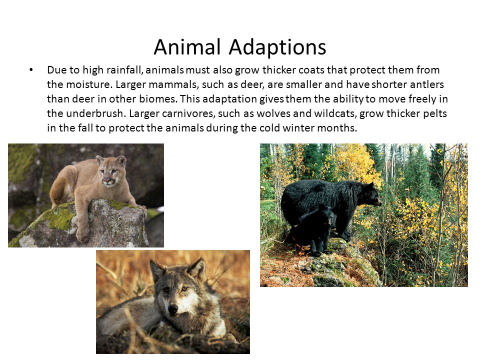 Animal Adaptions