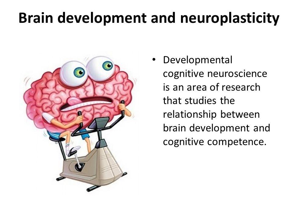 Brain development and neuroplasticity