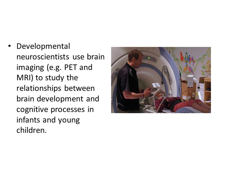 Developmental neuroscientists use brain imaging (e. g
