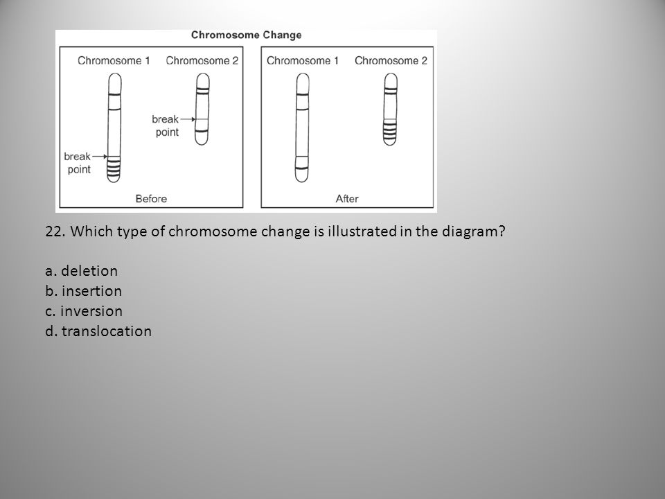 22. Which type of chromosome change is illustrated in the diagram