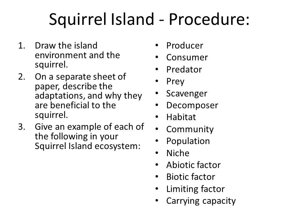 Squirrel Island - Procedure: