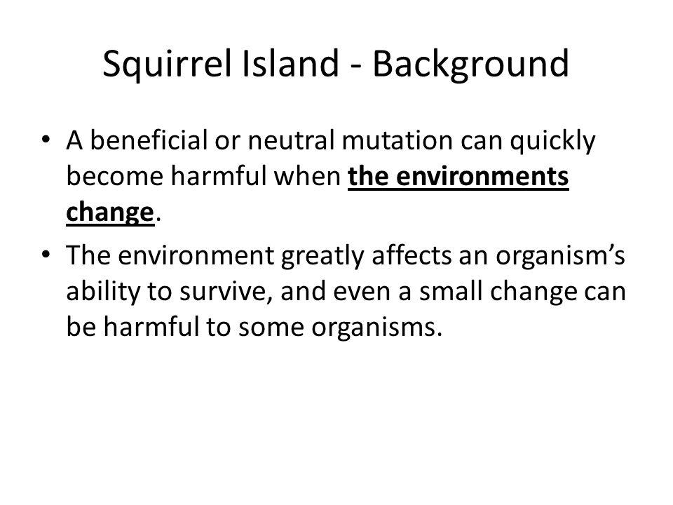 Squirrel Island - Background