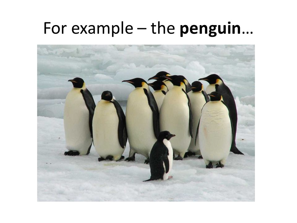 For example – the penguin…