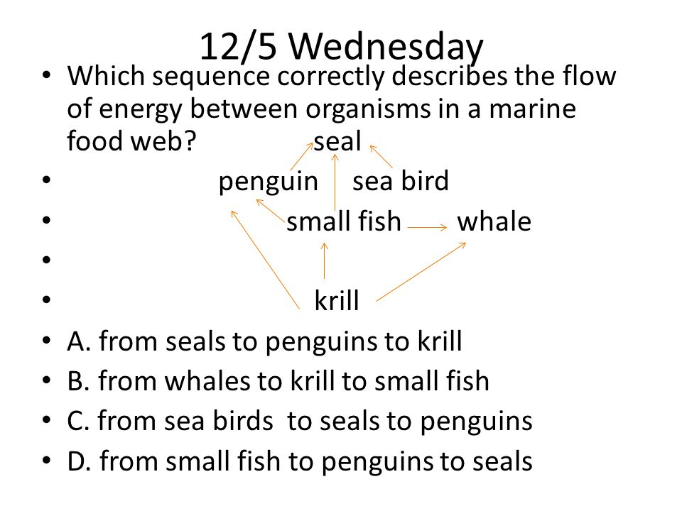 12/5 Wednesday Which sequence correctly describes the flow of energy between organisms in a marine food web seal.