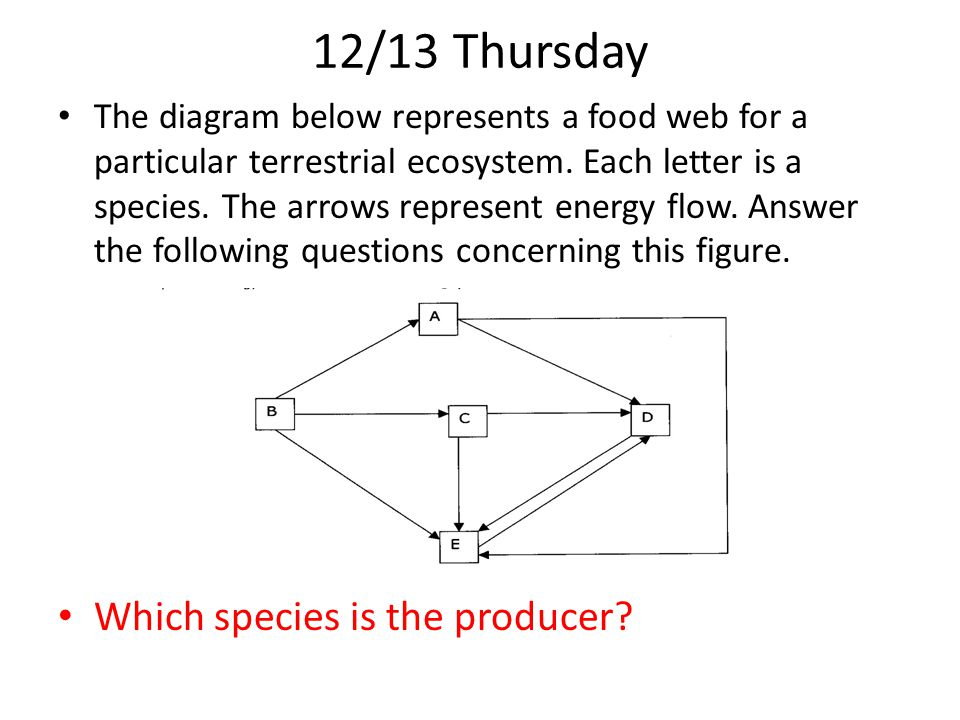 12/13 Thursday Which species is the producer