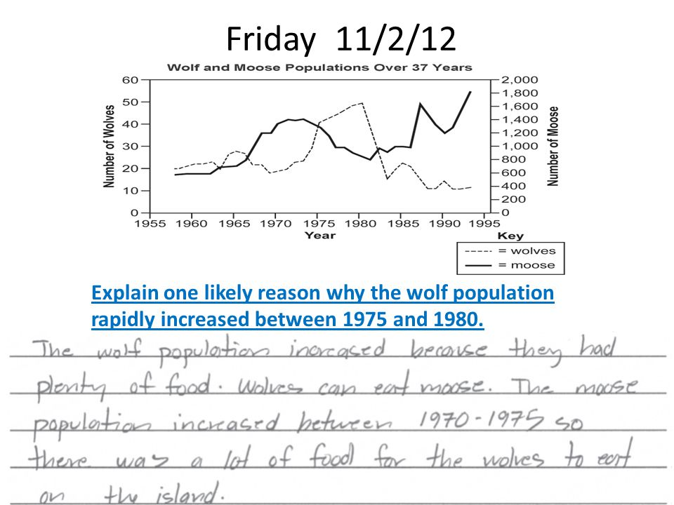 Friday 11/2/12 Explain one likely reason why the wolf population rapidly increased between 1975 and 1980.