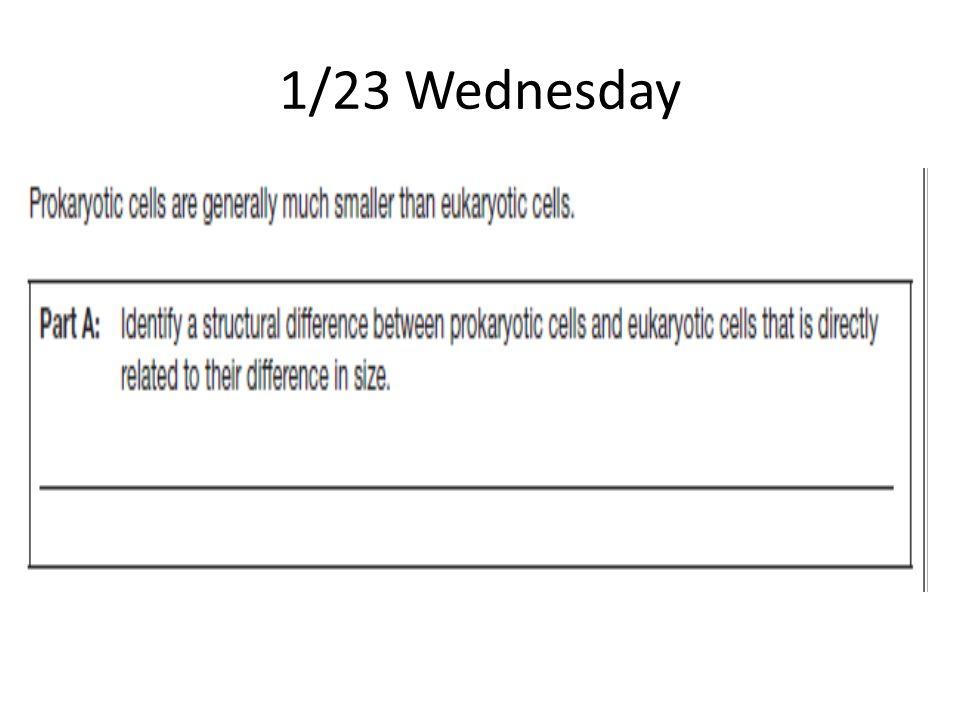 1/23 Wednesday