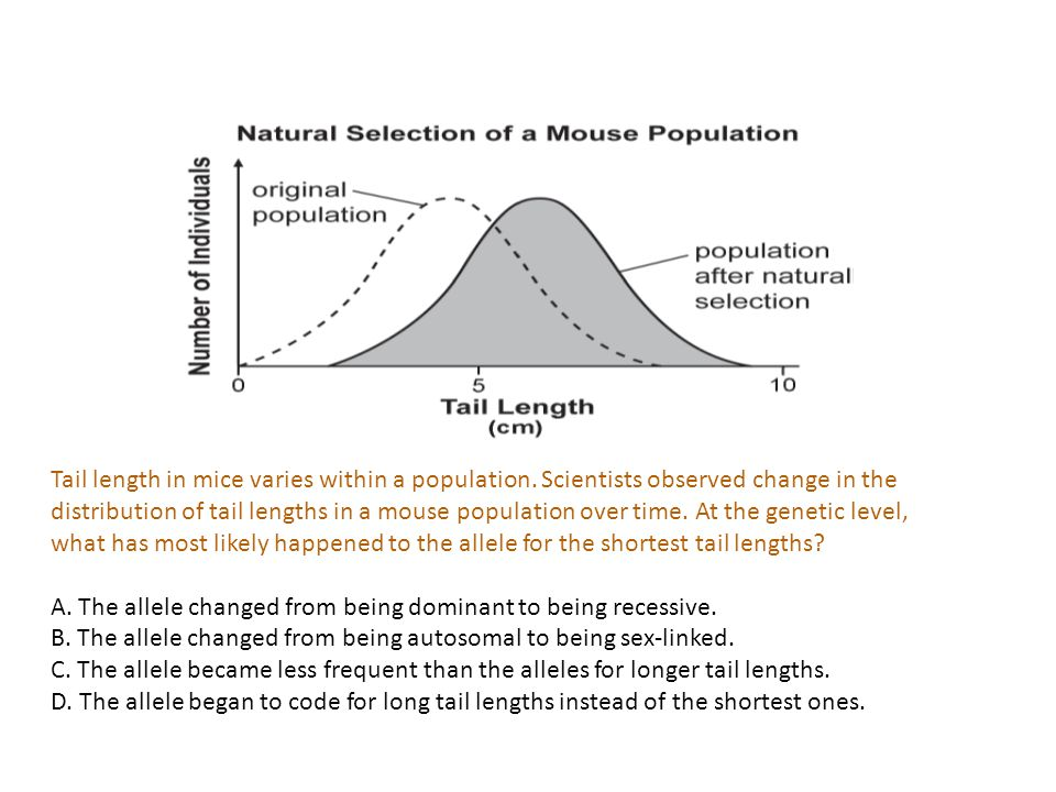 Tail length in mice varies within a population