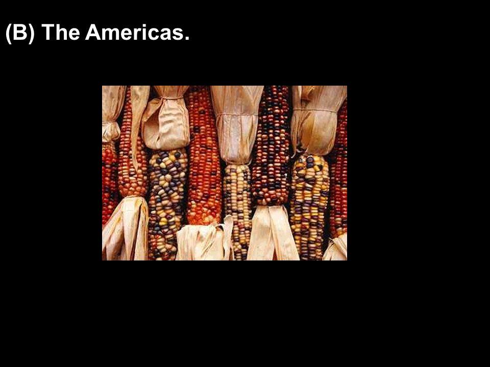 (B) The Americas.