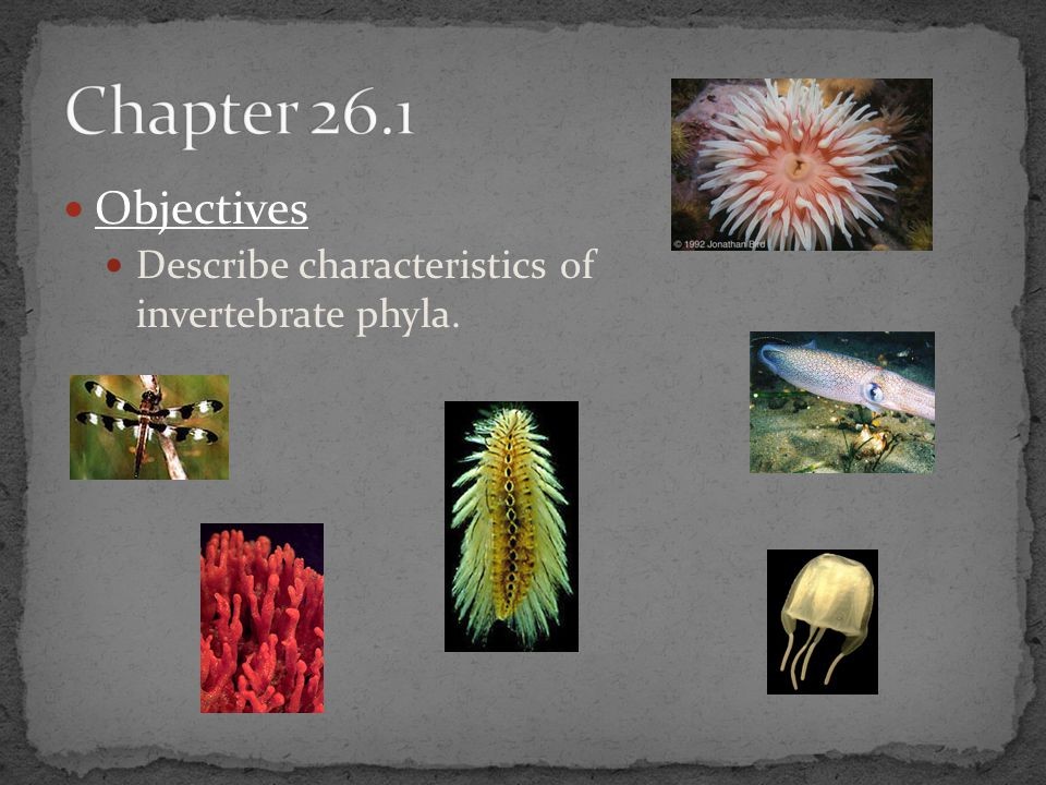 Chapter 26.1 Objectives Describe characteristics of invertebrate phyla.