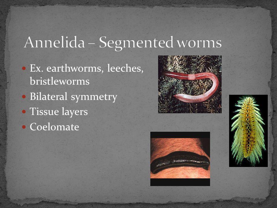 Annelida – Segmented worms