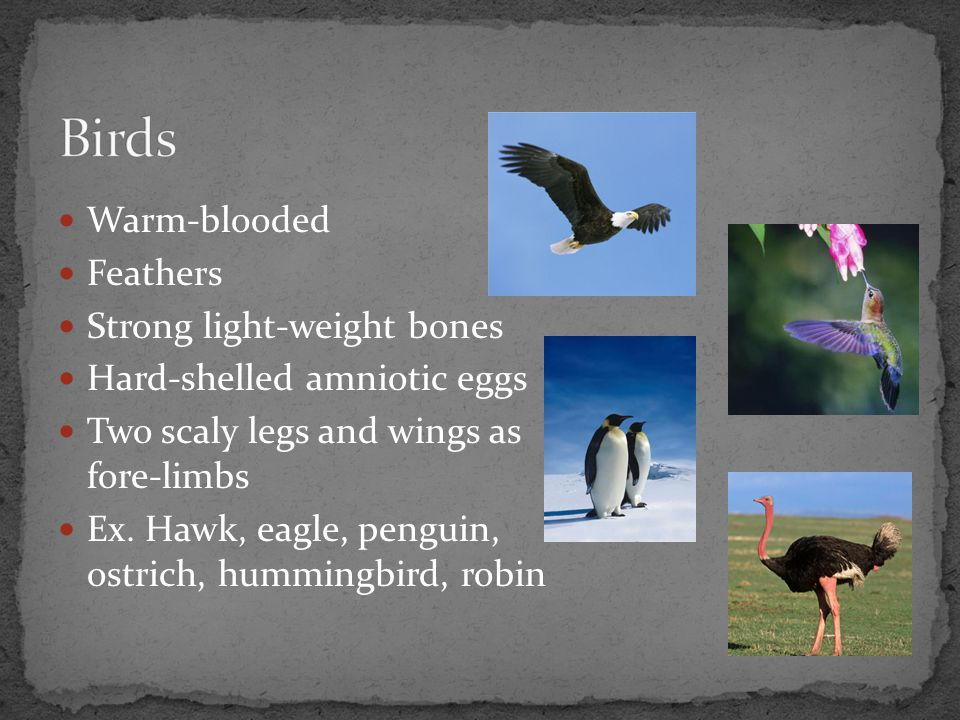 Birds Warm-blooded Feathers Strong light-weight bones