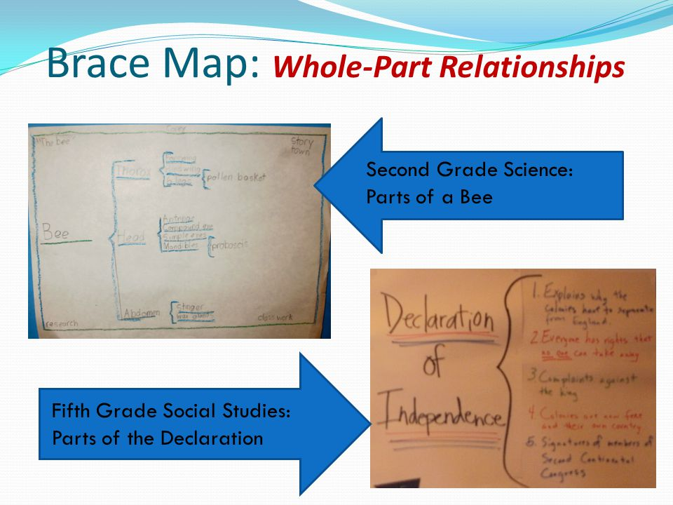 Brace Map: Whole-Part Relationships