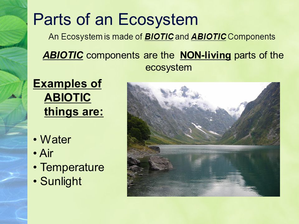 Parts of an Ecosystem Examples of ABIOTIC things are: • Water • Air