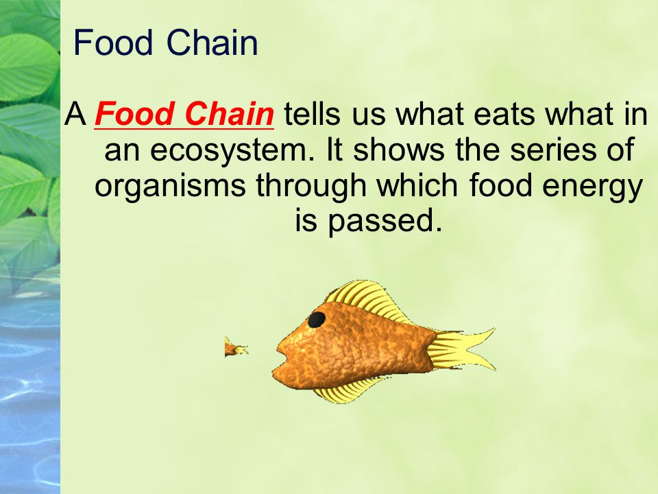 Food Chain A Food Chain tells us what eats what in an ecosystem.