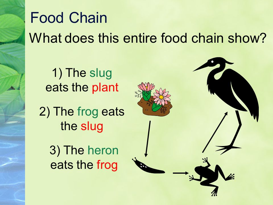 Food Chain What does this entire food chain show