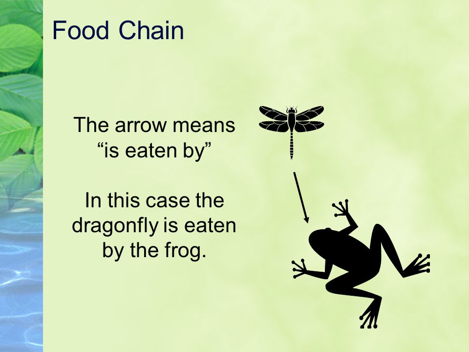 Food Chain The arrow means is eaten by