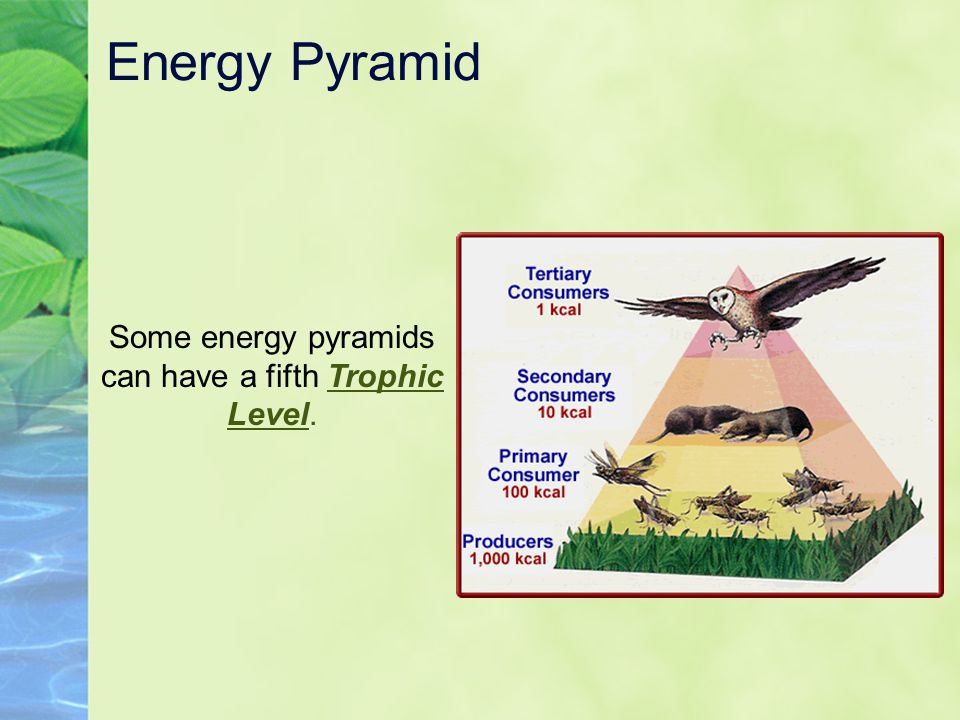 Some energy pyramids can have a fifth Trophic Level.