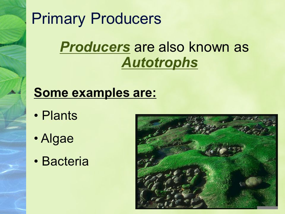 Producers are also known as Autotrophs
