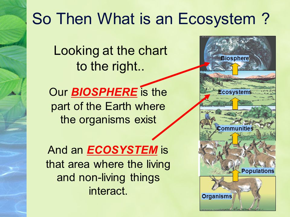 So Then What is an Ecosystem