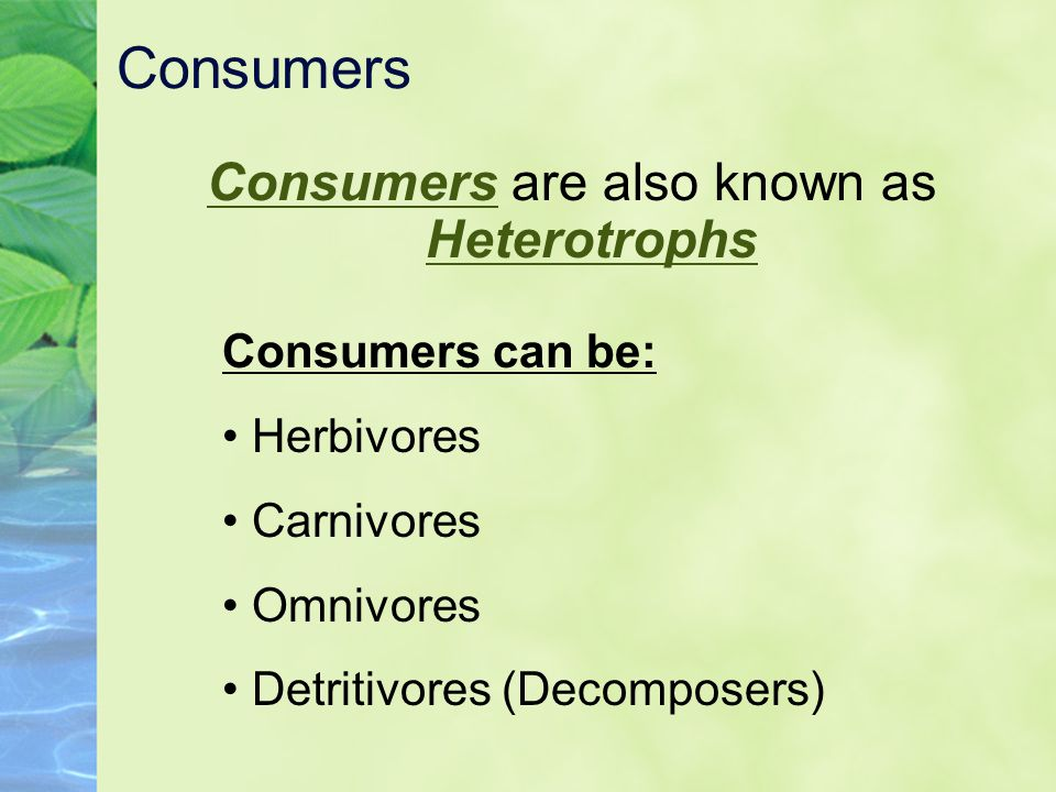 Consumers are also known as Heterotrophs