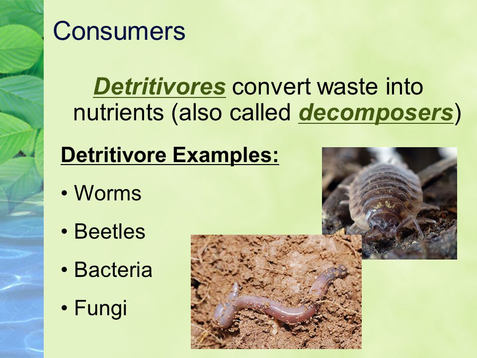 Detritivores convert waste into nutrients (also called decomposers)