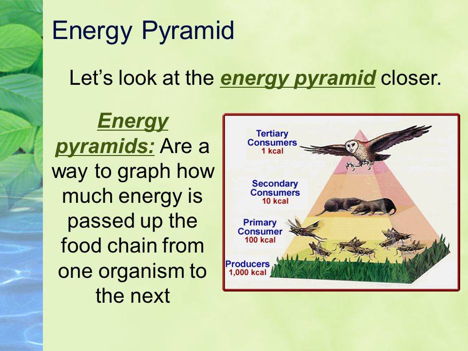 Let's look at the energy pyramid closer.
