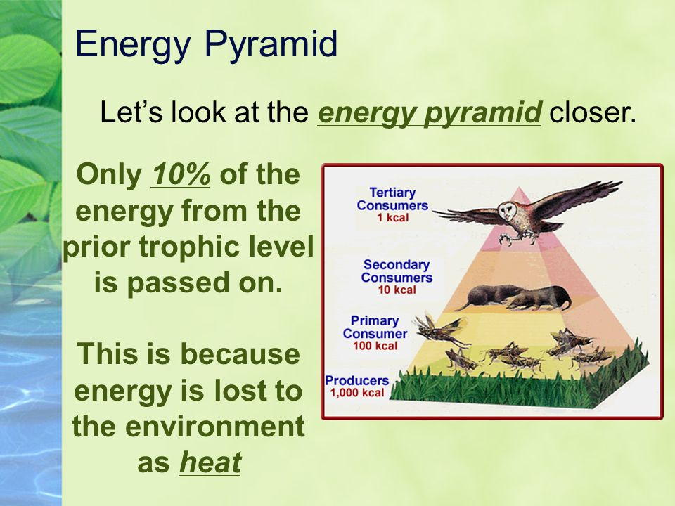 Energy Pyramid Let's look at the energy pyramid closer.