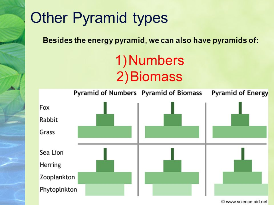 Besides the energy pyramid, we can also have pyramids of: