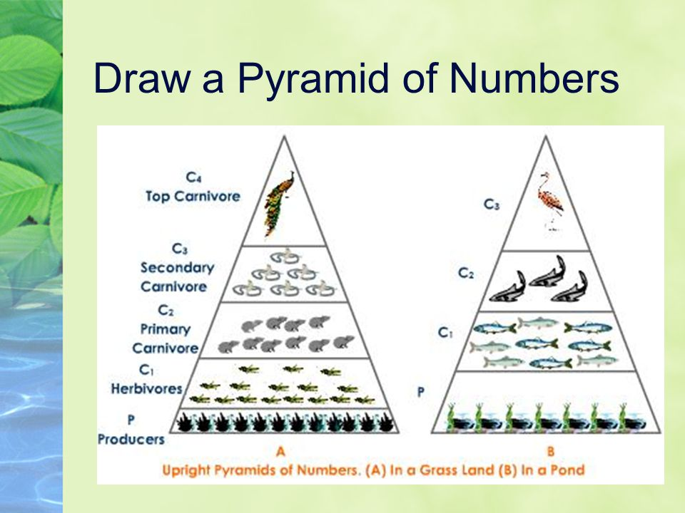 Draw a Pyramid of Numbers