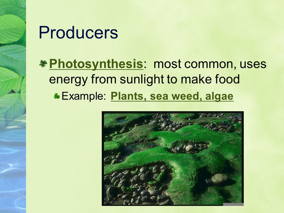 Producers Photosynthesis: most common, uses energy from sunlight to make food.
