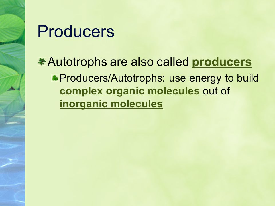 Producers Autotrophs are also called producers