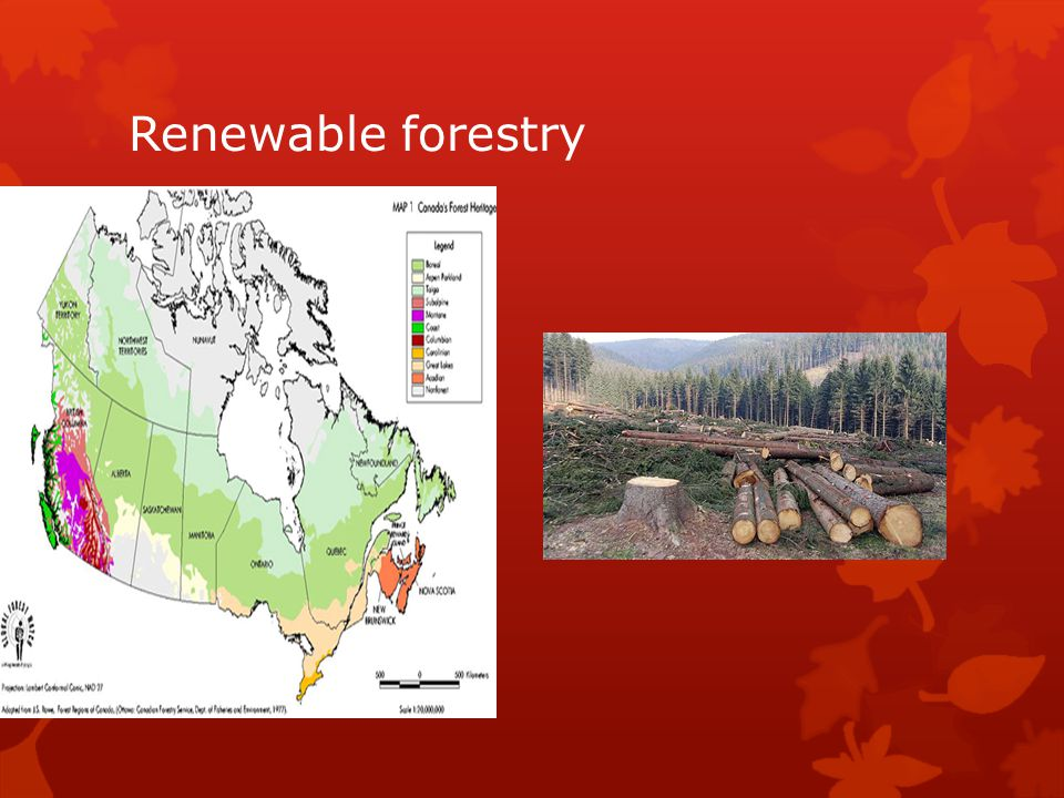 Renewable forestry