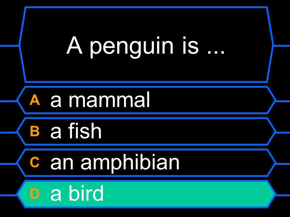 A penguin is ... A a mammal B a fish C an amphibian D a bird