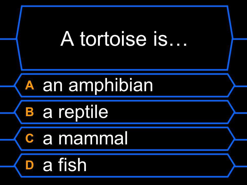 A tortoise is… A an amphibian B a reptile C a mammal D a fish
