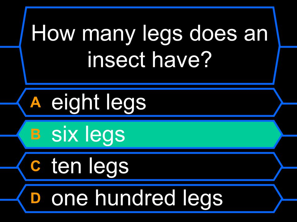 How many legs does an insect have