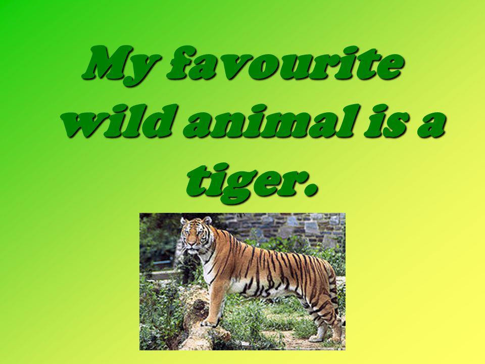 My favourite wild animal is a tiger.