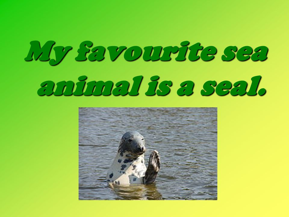 My favourite sea animal is a seal.