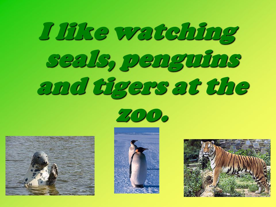 I like watching seals, penguins and tigers at the zoo.