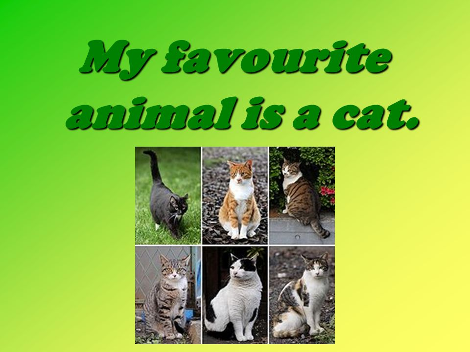 My favourite animal is a cat.