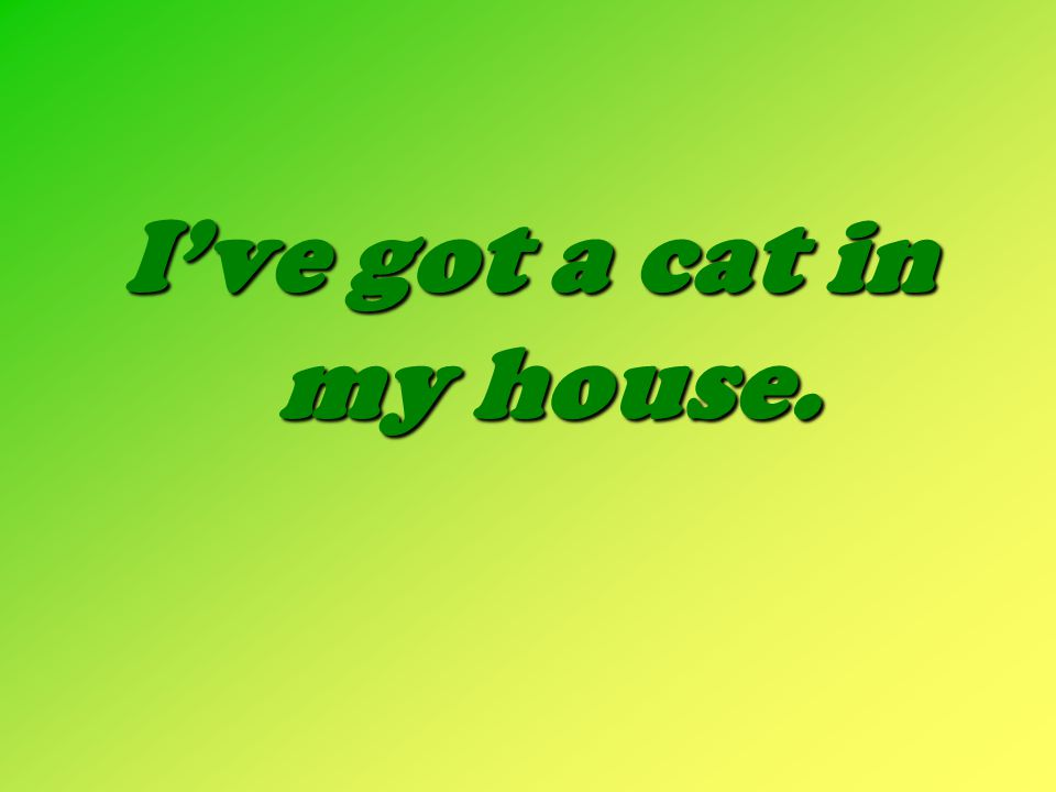 I've got a cat in my house.