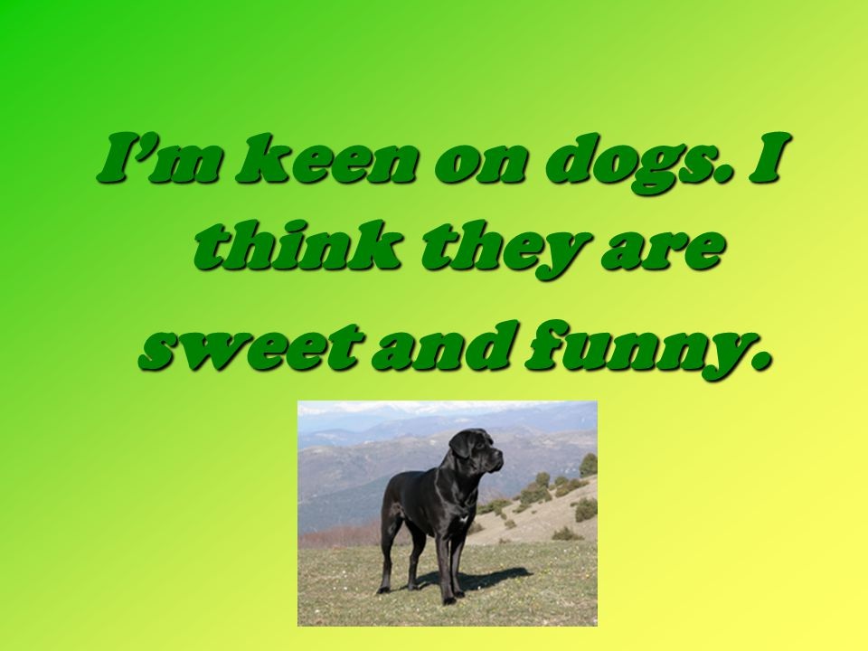 I'm keen on dogs. I think they are sweet and funny.