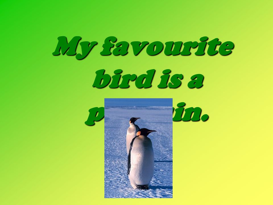 My favourite bird is a penguin.