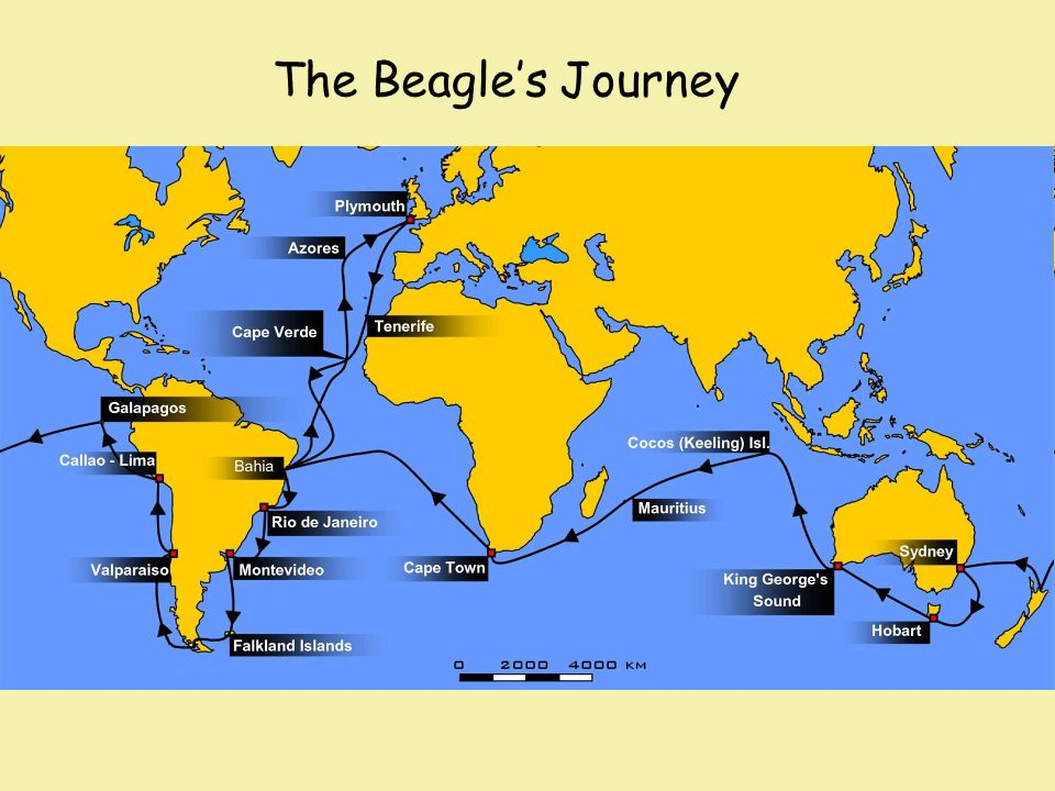 The Beagle's Journey