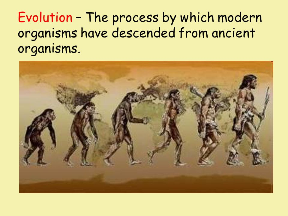 Evolution – The process by which modern organisms have descended from ancient organisms.