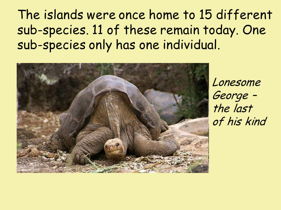 The islands were once home to 15 different sub-species