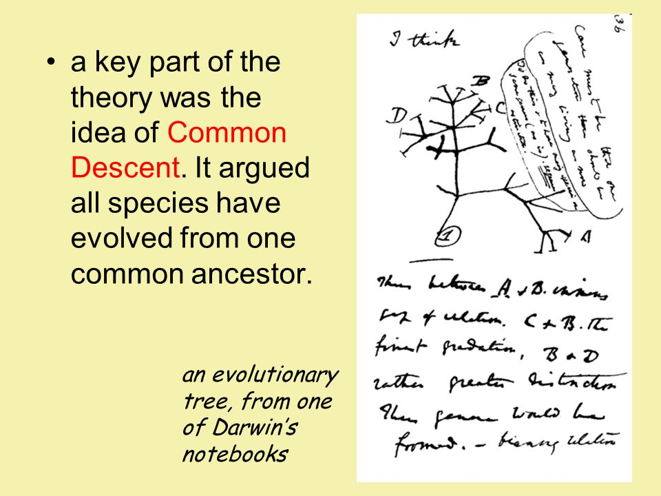 a key part of the theory was the idea of Common Descent