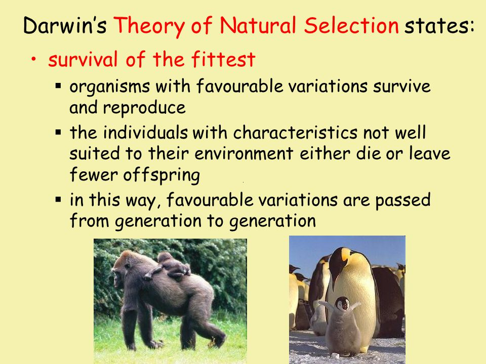 Darwin's Theory of Natural Selection states: