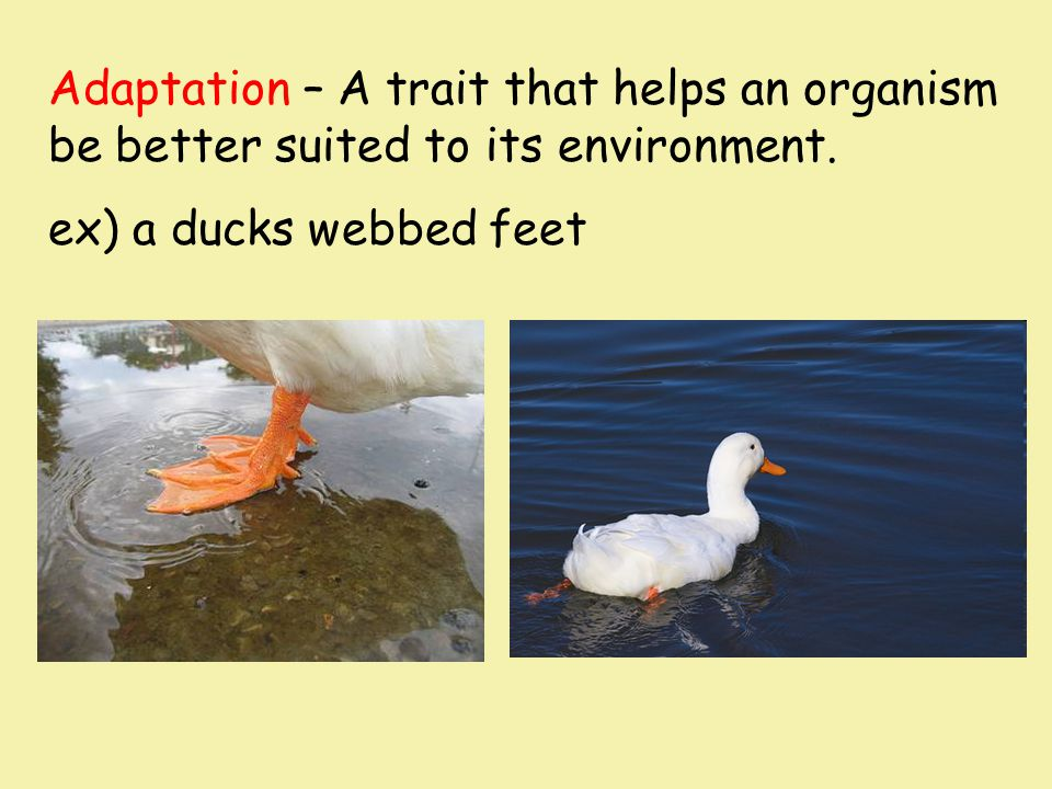 Adaptation – A trait that helps an organism be better suited to its environment.