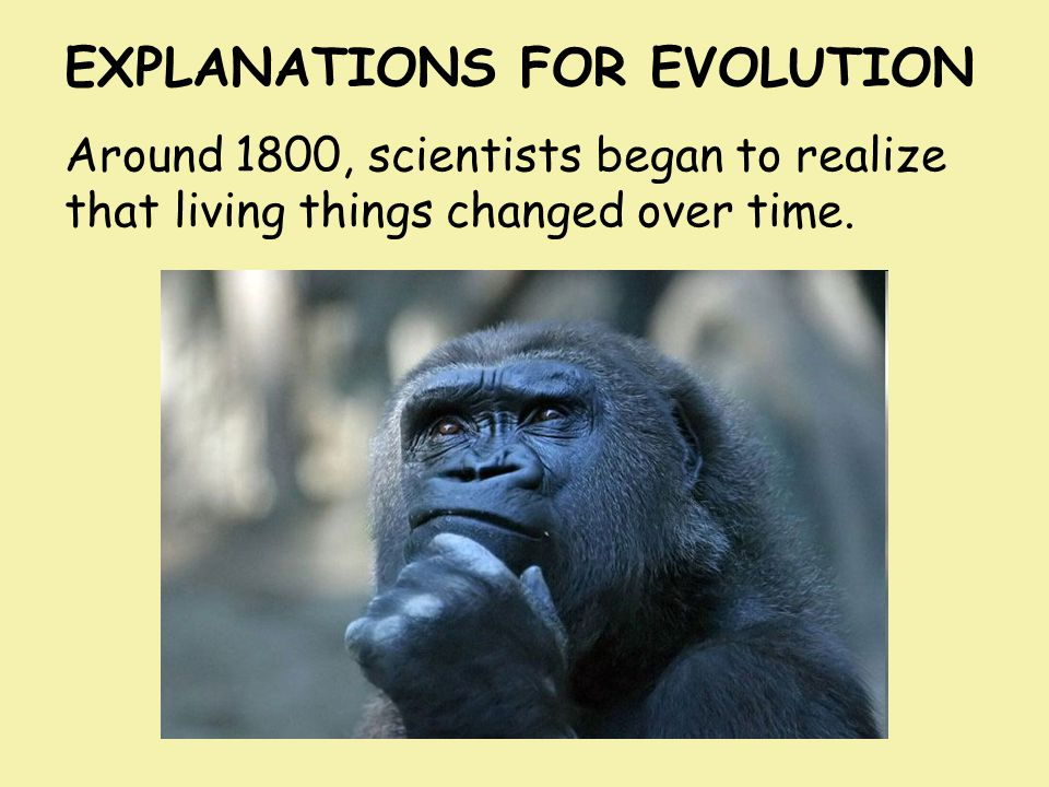 EXPLANATIONS FOR EVOLUTION